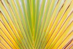 Texture abstraite de branches de palmier Photo stock