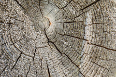 Texture aged cracked wooden tree section with rings, abstract background Stock Image