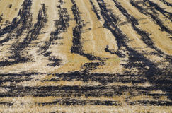 Texture agriculture Royalty Free Stock Photo