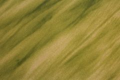 Texture of Algae on Beach Sand royalty free stock images
