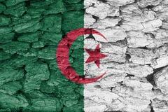 Texture of  Algeria flag. The texture of  Algeria flag on a decorative dry tree bark Stock Photos