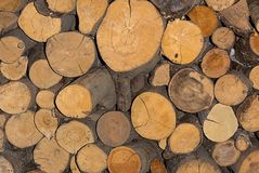 Texture anéis anuais adormecidos redondos do fundo do pinho do tronco da lenha do woodpile Fotos de Stock Royalty Free