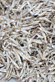 Texture of anchovy fish after drying in sunlight. Royalty Free Stock Photos