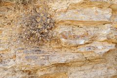 Texture of ancient stone wall with dry flowers. That grown on it Stock Photo