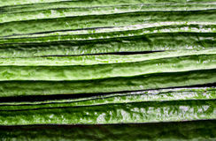 Texture of Angled loofah. Green vegetable Stock Images