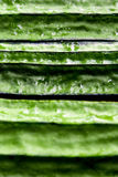 Texture of Angled loofah. Green vegetable Stock Photo