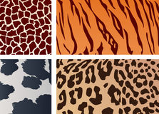 Texture of animal skin Stock Images