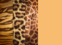 Texture of animal skins Stock Image