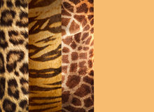 Texture of animal skins Royalty Free Stock Photos