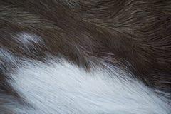 Texture animale de fourrure photos stock