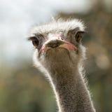 Texture animale de tête d'oiseau Photographie stock libre de droits