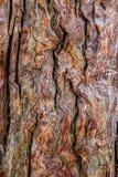 Texture antique d'arbre Photo libre de droits