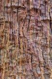 Texture antique d'arbre Photographie stock libre de droits