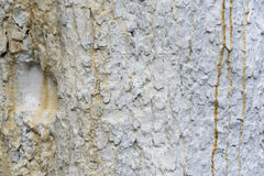Texture of apple tree bark, whitewashed by lime, close. Ukraine stock photos