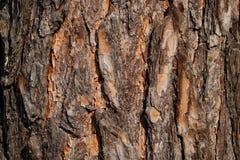 Texture approximative de la vieille écorce d'arbre image stock