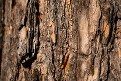 Texture approximative de la vieille écorce d'arbre photos libres de droits