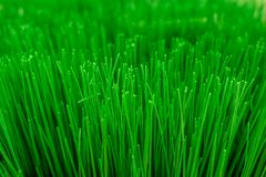 Texture of artificial grass with shallow depth of field. Close up texture of artificial grass with shallow depth of field , abstract background Royalty Free Stock Photo