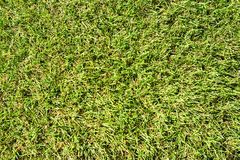 The texture of the artificial lawn on top. Close royalty free stock images