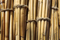 The texture of dried cane stock image