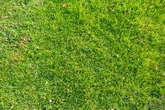 Texture au soleil 3 d'herbe verte Image libre de droits