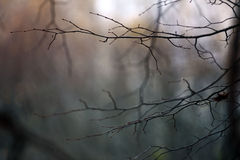 Texture of autumn branch background Stock Photography