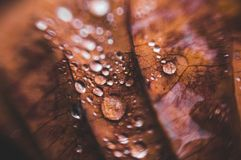 Texture of autumn leaves with drops of water nature background stock images