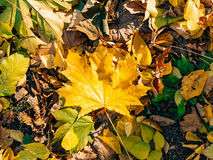 Texture of autumn leaves stock photos