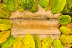 Texture autumn Period of yellow leaves and wood Royalty Free Stock Photo