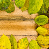Texture autumn Period of yellow leaves and wood Royalty Free Stock Photos
