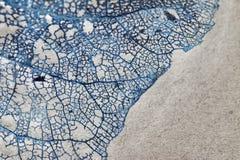 Texture avec les feuilles putréfiées avec des fibres Image stock