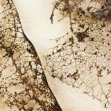 Texture avec les feuilles putréfiées avec des fibres Photos libres de droits