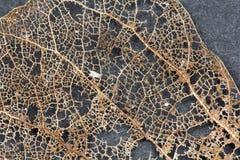 Texture avec les feuilles putréfiées avec des fibres Photo libre de droits
