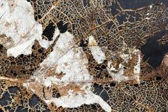 Texture avec les feuilles putréfiées avec des fibres images stock