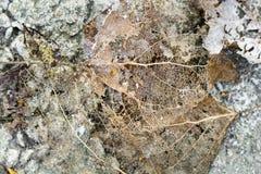 Texture avec les feuilles putréfiées avec des fibres sur une surface en béton Photos libres de droits