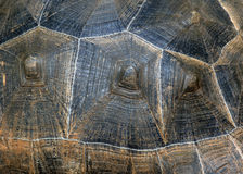 Texture back of turtle tortoise. It is the detail of natural design of a back of turtle Stock Images