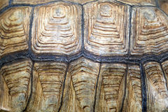 Texture back of turtle tortoise. Turtles are reptiles of the order Testudines characterised by a special bony or cartilaginous shell developed from their ribs Stock Photos