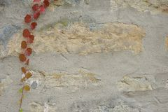 Texture, Old stone wall with ivy as background. stock photography