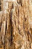 texture background abstraction bark wood fibers of palm tree clo royalty free stock photography
