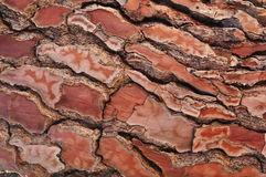 Bark of pine tree royalty free stock photos