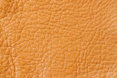 Texture of background for designer, pattern of genuine leather surface. For background , backdrop, substrate Royalty Free Stock Image