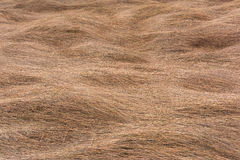 Texture background of dry grass Stock Image