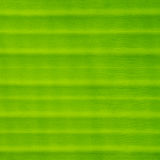 Texture background of fresh green Leaf Stock Photos