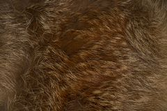 Texture, background from a fur product from a red fox stock photography