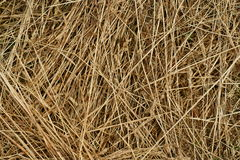 Texture background of hay Stock Photo