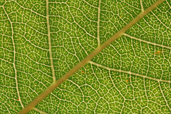 Texture, background of leaf Stock Photo