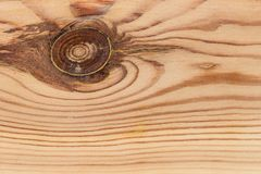 Texture, background, light wood with annual rings stock photography