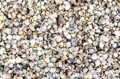 Texture background with many sea shells stock photos