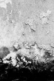 Texture background of the old fungus wall, black and white. The peeling paint stock image