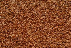 Texture background is out of boiled buckwheat. Royalty Free Stock Photography
