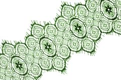 Texture, background, pattern. lace fabric. green. Stunning embroidered flowers bloom on the border along both edges, while. Sporadically grows through the royalty free stock photo